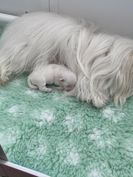 19-lala-puppy-lulu