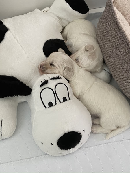 20-puppy-photos