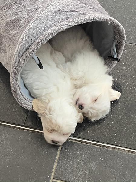 21-puppy