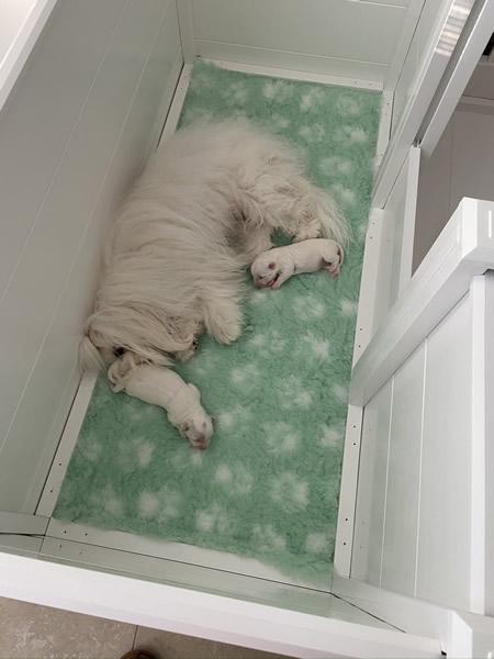 22-genie-with-pups