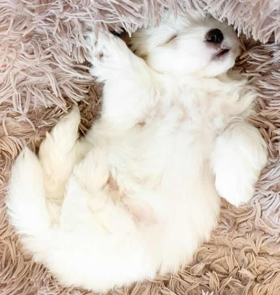 24-puppy