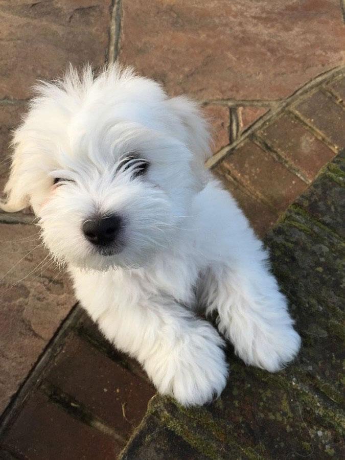 puppies-16