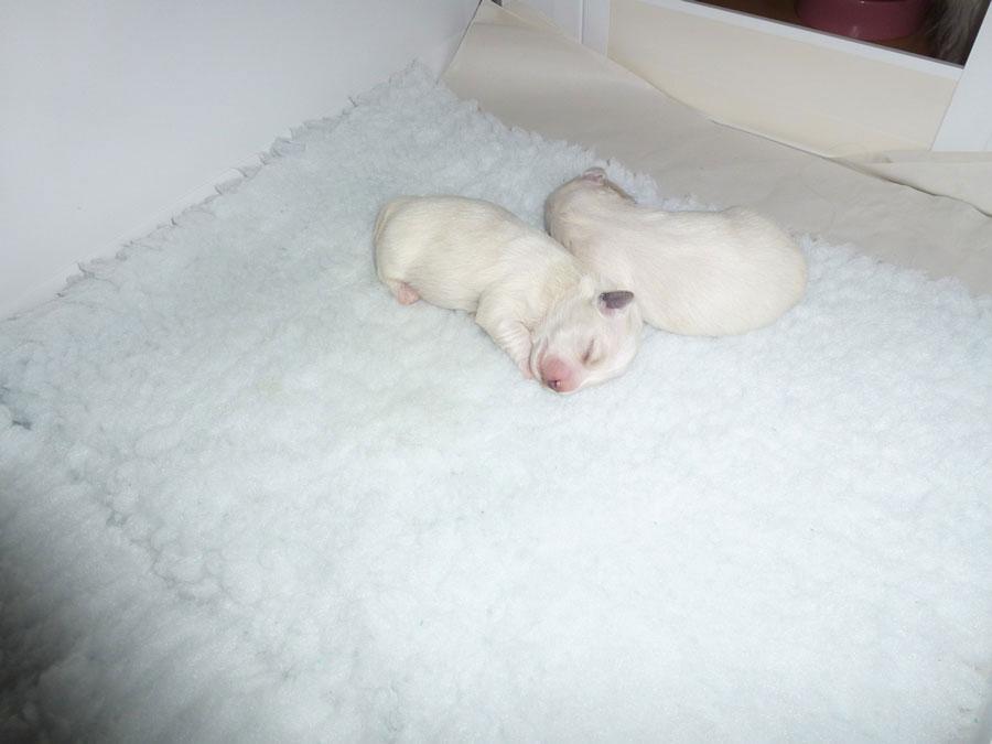 puppies-7