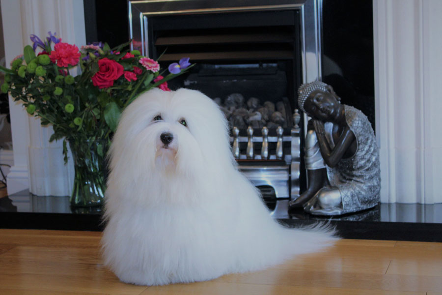 Teddy_our_dogs_