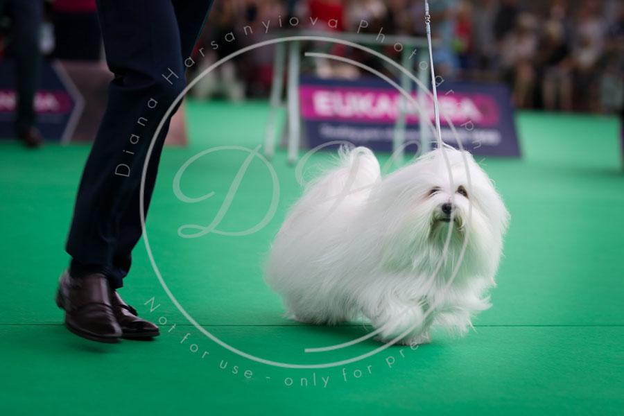World_dog_show