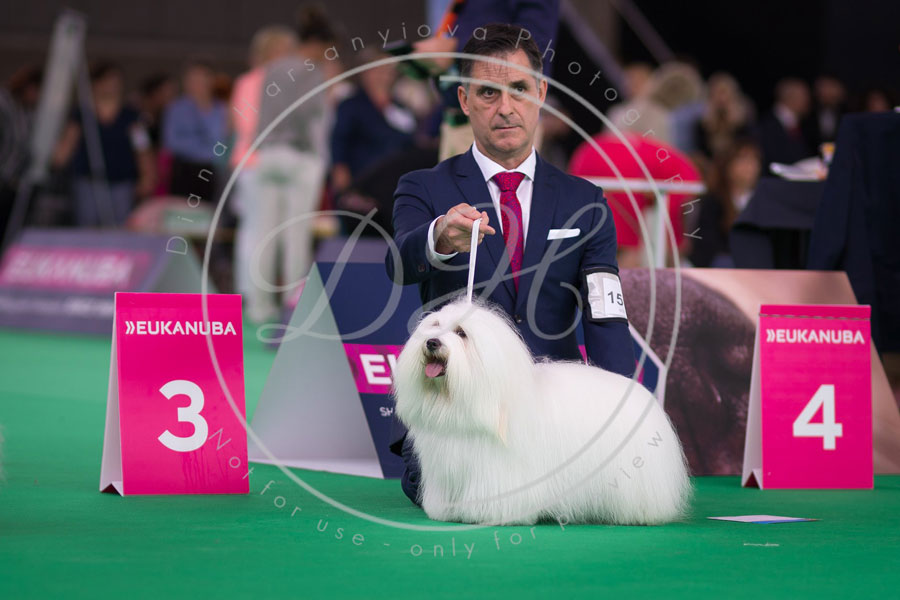 World_dog_show_1