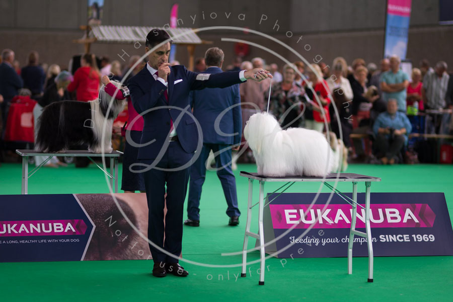 world_dog_show_4